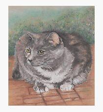 Precious Cat Photographic Print