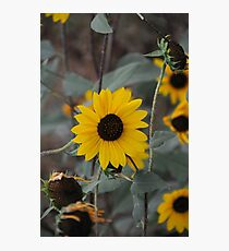 Cloudless Photographic Print