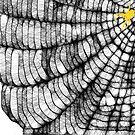 Scribbler Spider Web 2 by barnsis