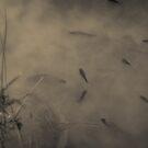 Quiet Water by Dragomir Vukovic
