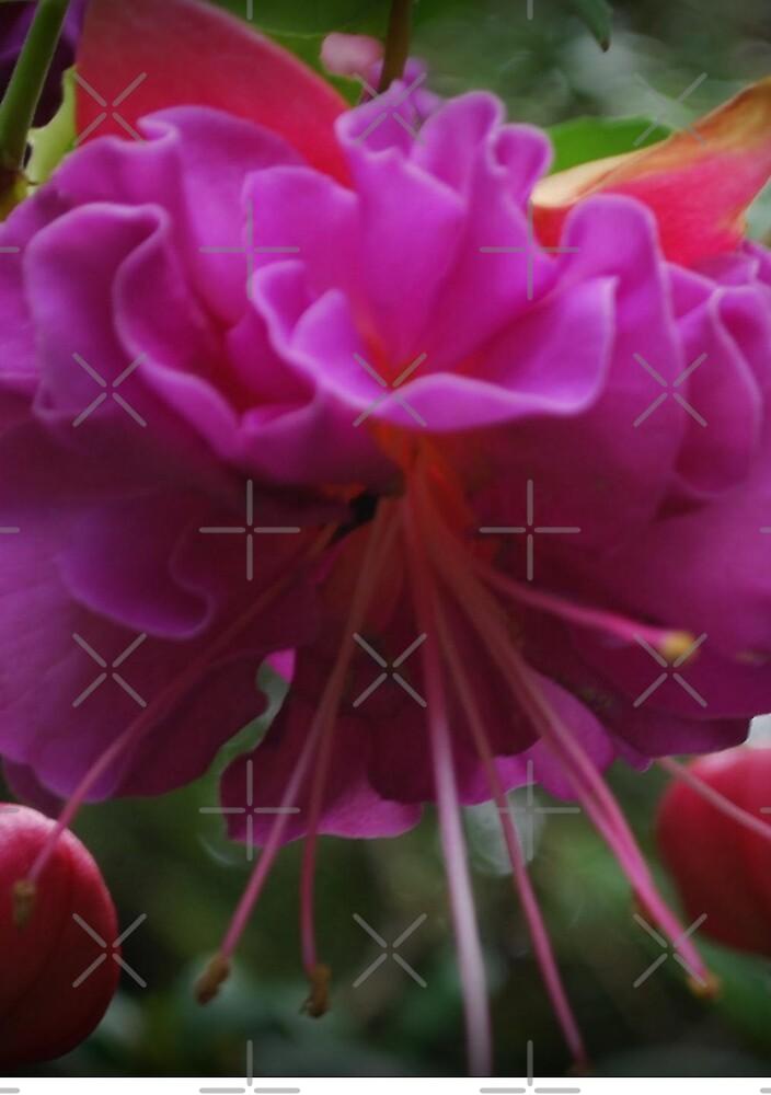 Blooming Pretty Purple Flower by alliemac