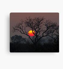 Sunset At Londolozi Canvas Print