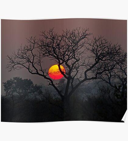 Sunset At Londolozi Poster