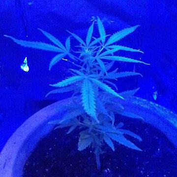 Marijuana plant by mcfisturanalcav