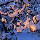 Suntanning snow by astrolabio