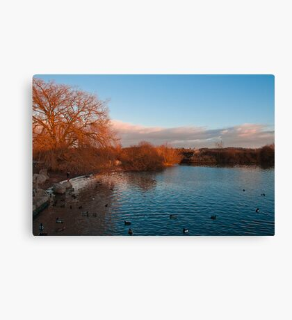 Sun setting at Attenborough Nature Reserve  Canvas Print