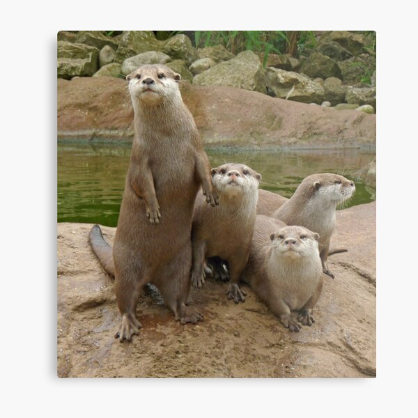 The power of otter Metal Print