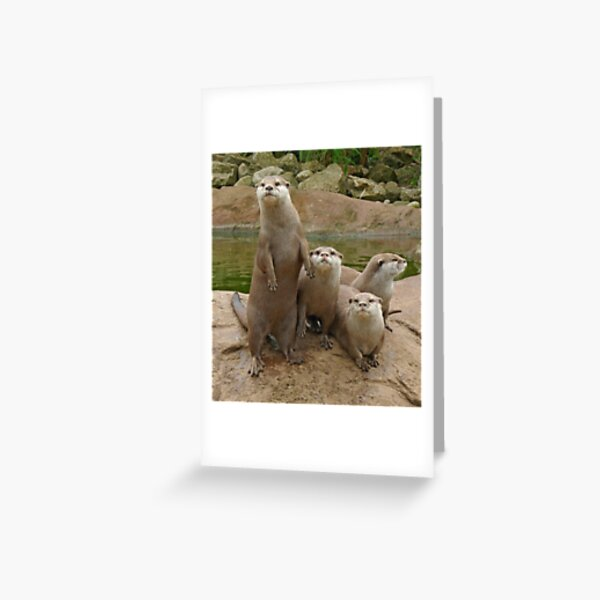 The power of otter Greeting Card