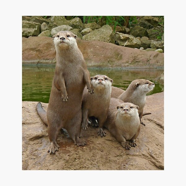 The power of otter Photographic Print