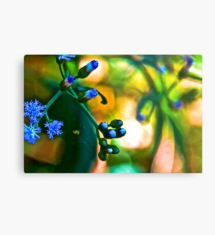 Blue Grass: On featured: Nikon-d90-users Group & Weekend-photographer Group Metal Print