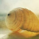 shell light by lucy loomis