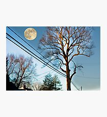 Tree on Warren Road Photographic Print