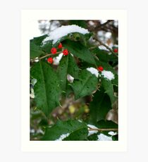 Snow & Holly-Red, Green, White Art Print