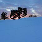 Swedish Winter by malou