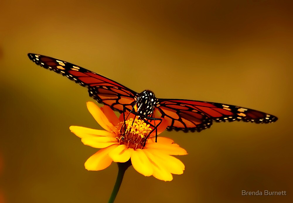A Butterfly's Perspective by Brenda Burnett