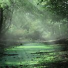 Morning Bog by Chris Williams