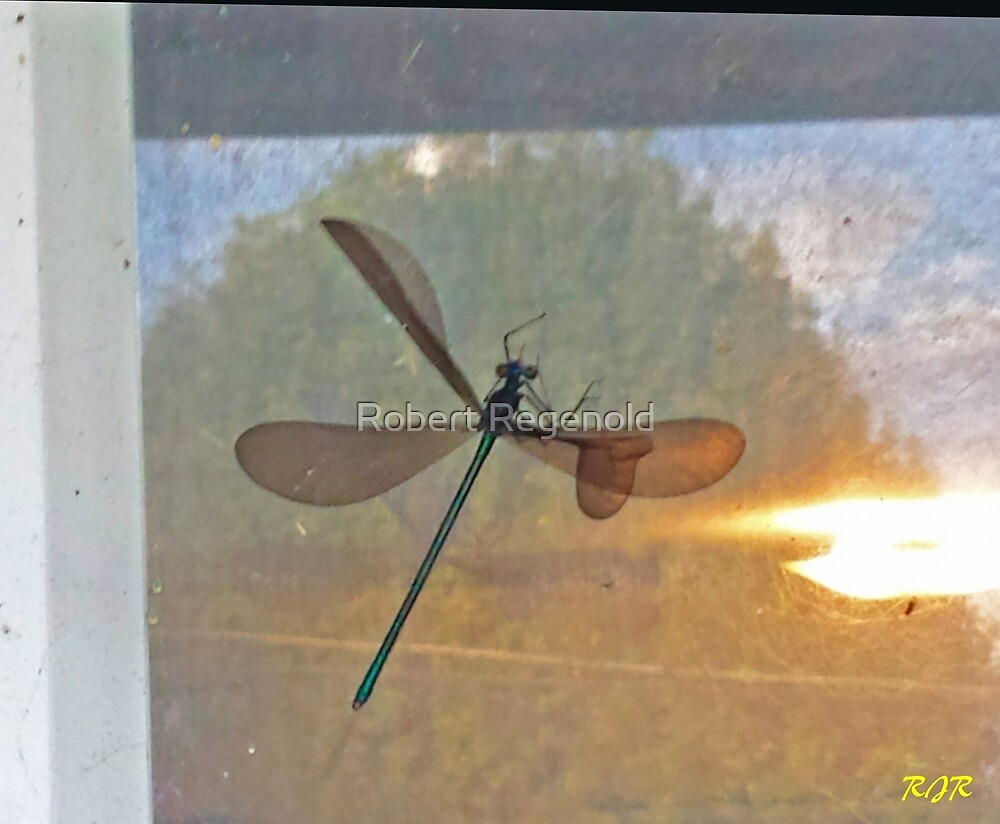 """Dragonfly Captured"" by Robert Regenold"