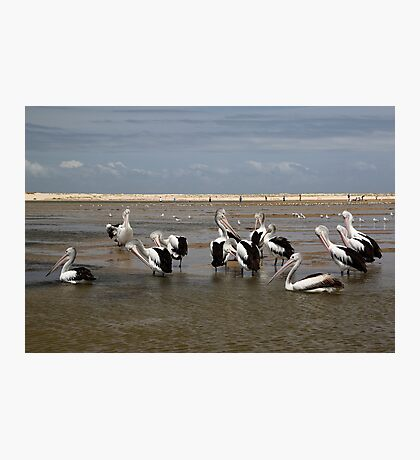 Pelican Beach II Photographic Print