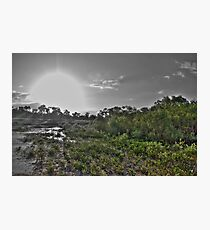 Mangrove Sunset HDR Photographic Print