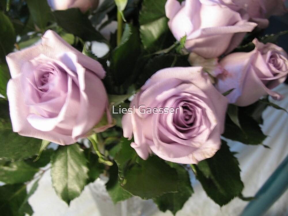 purple roses by Liesl Gaesser
