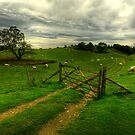 green fileds by adouglas