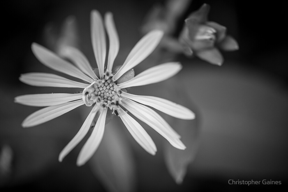 Yellow to Black and White by Christopher Gaines