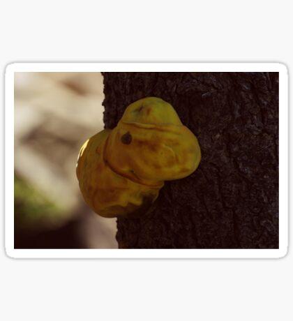 A tree fungus Sticker