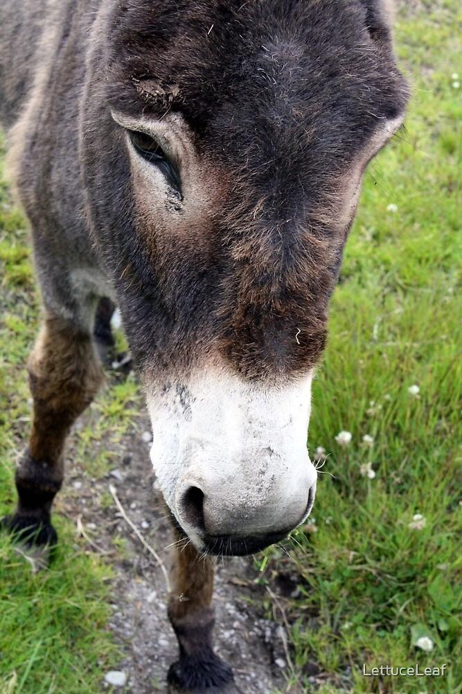 Donkey by LettuceLeaf