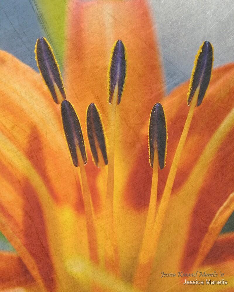 Blossom by Jessica Manelis