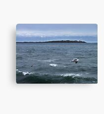 Trial Island and Seabirds Canvas Print
