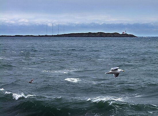 Trial Island and Seabirds by George Cousins