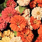 Happy Little Zinnias by O. Joy