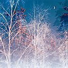 Once in a white forest by natans
