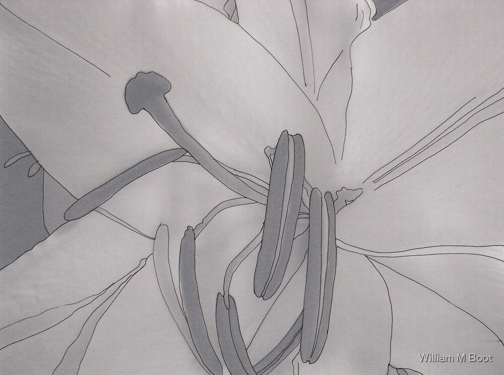 Untitled Flower 14 by William M Boot
