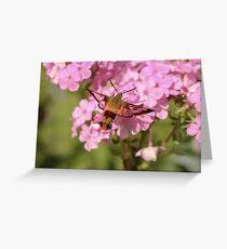 Hummingbird Moth Wings Greeting Card