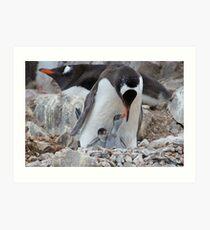 Gentoo Penguin feeding chick in Antarctica Art Print