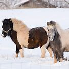 Ponies in Snow by Michael  Dreese