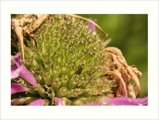 Flower Tubes by Gary Horner