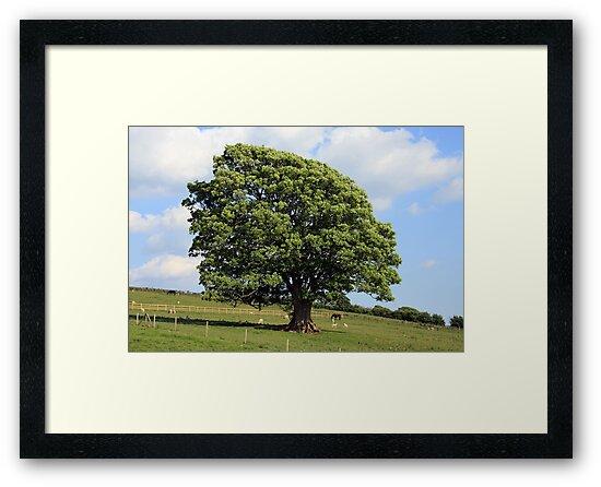 Oak Tree in a Field by JHMimaging