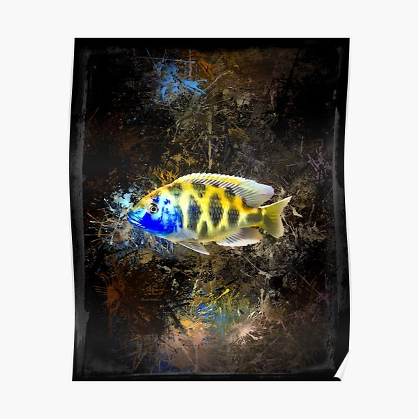 Giraffe Hap African Cichlid Abstract Portrait Poster