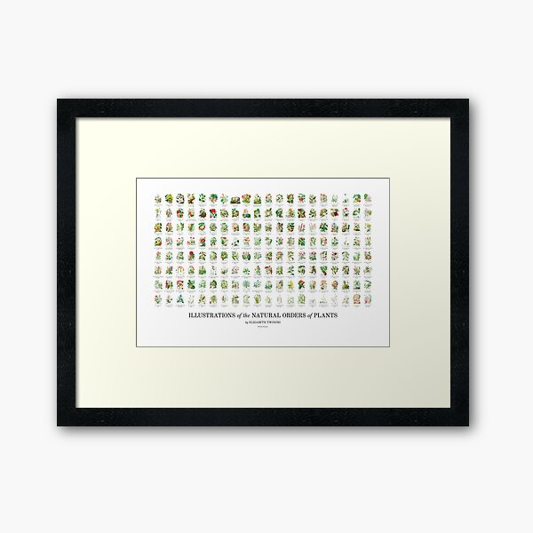 Elizabeth Twining - All 160 Illustrations Framed Art Print