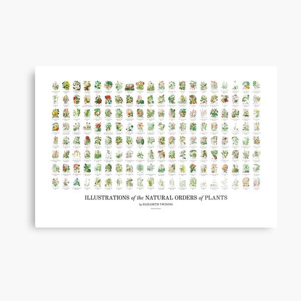 Elizabeth Twining - All 160 Illustrations Metal Print