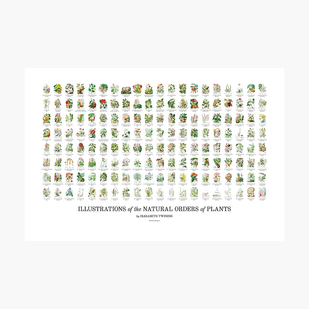 Elizabeth Twining - All 160 Illustrations Photographic Print