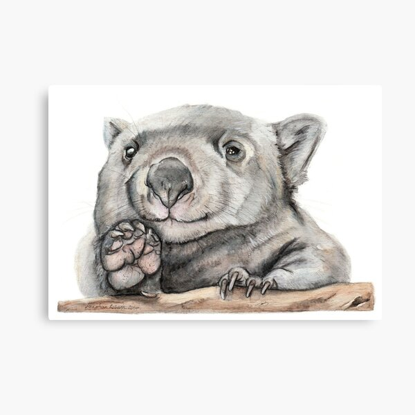 Lucy the Wombat Canvas Print
