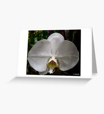 Beautiful White Orchid Greeting Card
