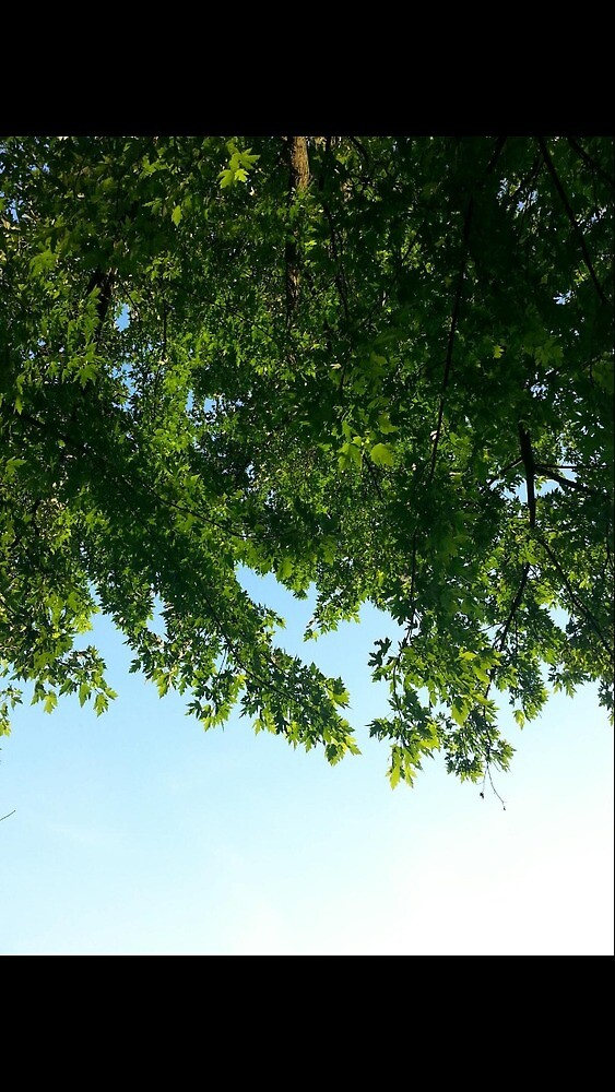 Maple Tree by toriruby96