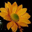 Flowers by anihaa