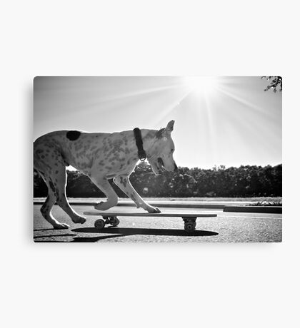 Cookie the skateboarding dog Canvas Print