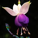 Ballerina of the Garden  by Bev Pascoe