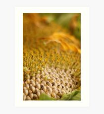 """Spent Beauty - A Sunflower in my garden"" Art Print"